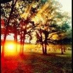 danielclayton-sunburst2