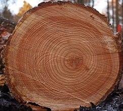 CS4K-Tree_rings-Wikicommons