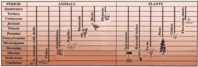 USGS Fossil Chart