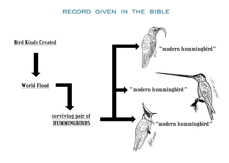 CommonAncestorGraph2