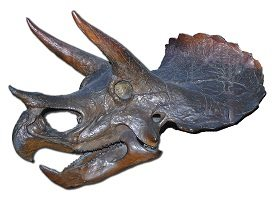 Triceratops fossil with horns like Armitage found.