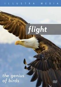 flight-genius-of-birds-illustramedia-dvd