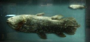 Coelacanth, Smithsonian