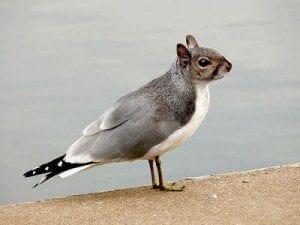 Creation Club Hybrid Bird Squirrel
