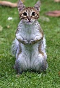 Creation Club Hybrid Cat Squirrel
