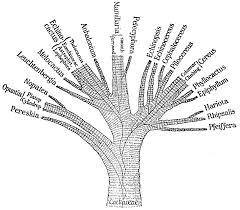 Creation Club Phylogenetic Tree