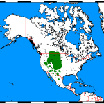 Pronghorns live where the map shows green.