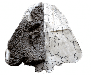 Black Metoposaur skull being restored at Mt. Blanco fossil lab, 2015.