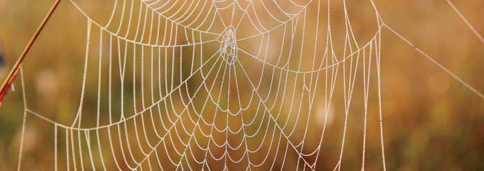 A dew bespeckled spider's web