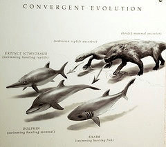 convergent evolution cs4k