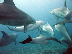 convergent evolution dolphins cs4k