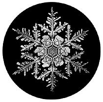 the mystery of snowflakes tammara horn 1