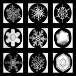 Snowflakes under the microscope, photo credit: tammara horn