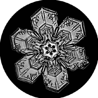 the mystery of snowflakes tammara horn 2