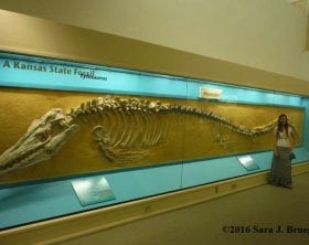 Beside a tylosaur (type of mosasaur) fossil at the Sternberg Museum in Hays KS, with Sara Bruegel