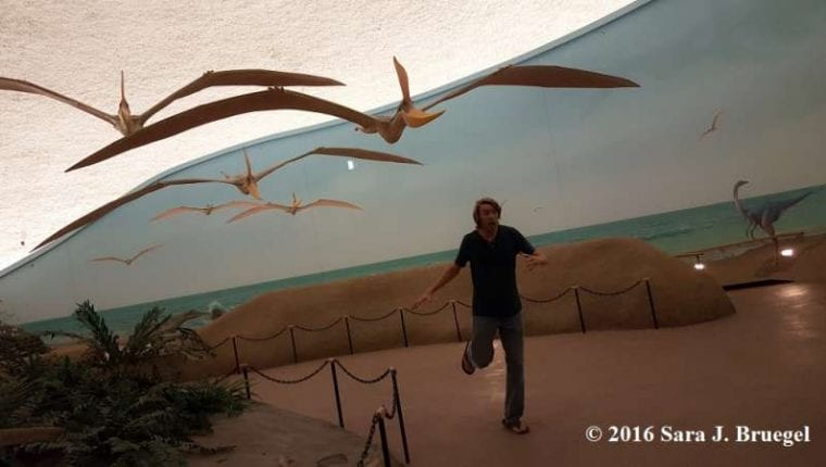 Pterosaur models in the Sternberg Museum.  Photo by Sara J. Bruegel 2016