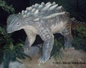 Ankylosaur model- photo copyright David Mikkelson, 2012.  Used with permission