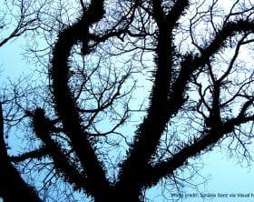 Fractal Branching