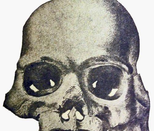creation-club-calaveras_skull
