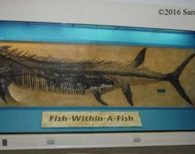 """Fish-Within-A-Fish"" from the Sternberg Museum in Hays, Kansas"