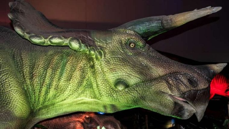 armitage-article-head-of-triceratops-dinosaur