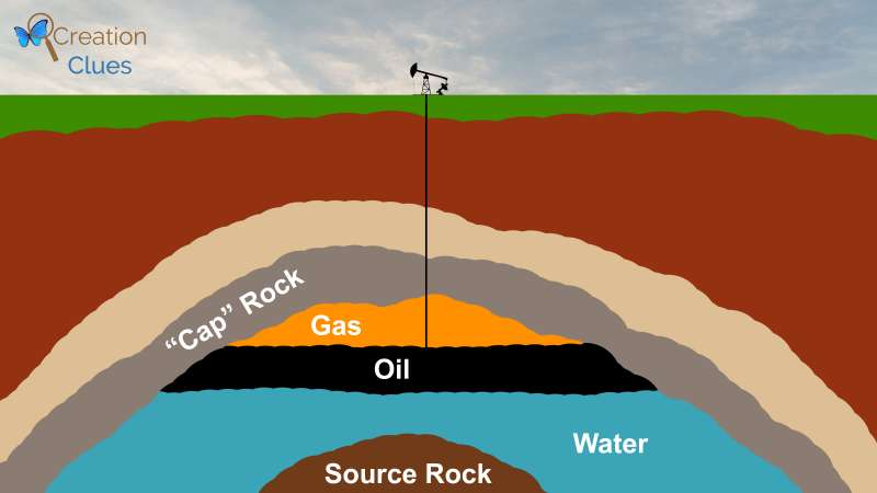 An example of where oil is found. Not made to scale. Diagram copyright Creation Clues, 2017