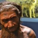 Neanderthal man model: ID 53497810 © Slawek Kozakiewicz | Dreamstime.com