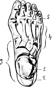 Diagram of foot bone sections