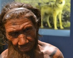 Neanderthal man reconstruction: ID 53497810 © Slawek Kozakiewicz | Dreamstime.com