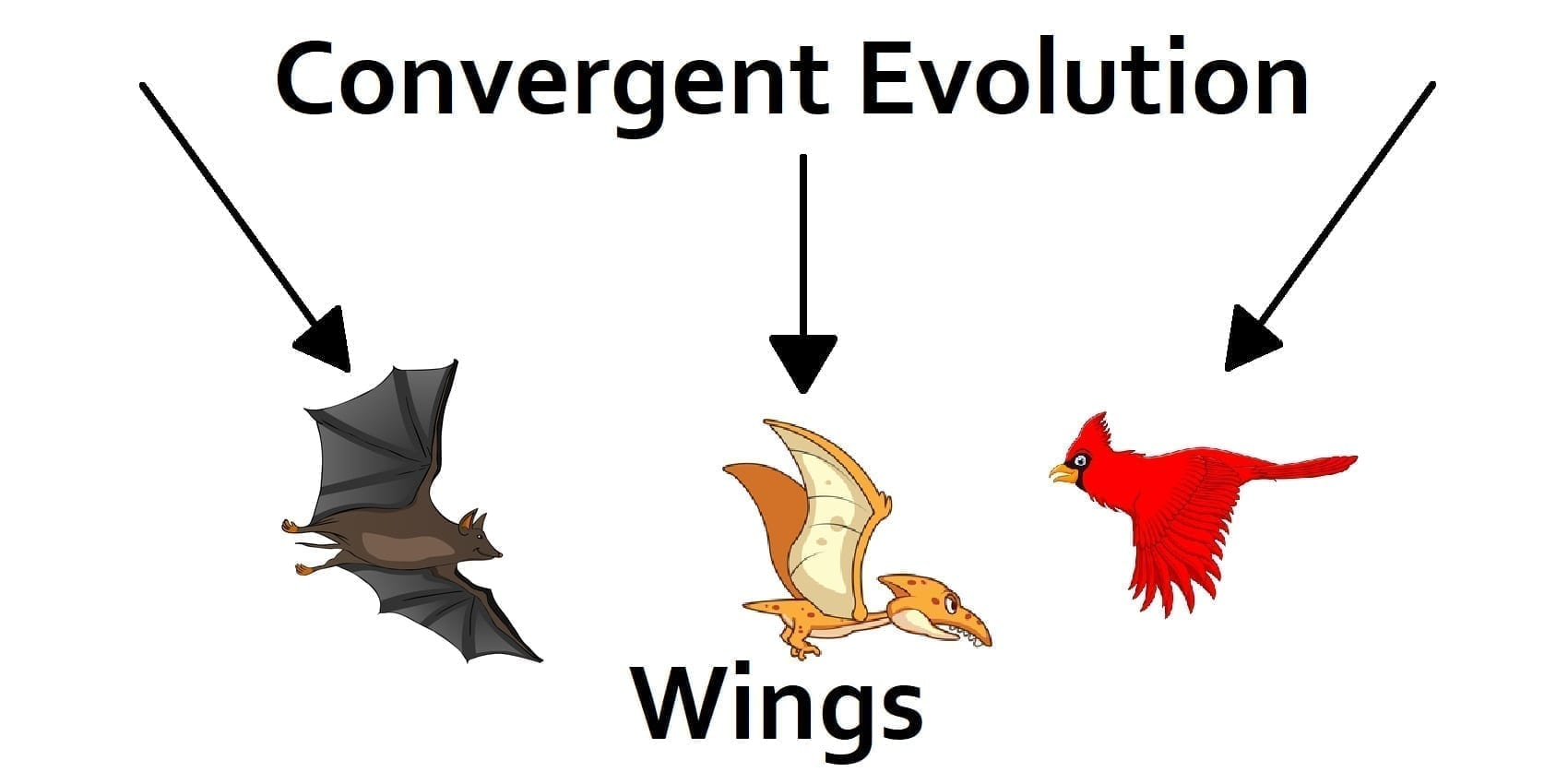 Convergent evolution diagram of flighted organisms