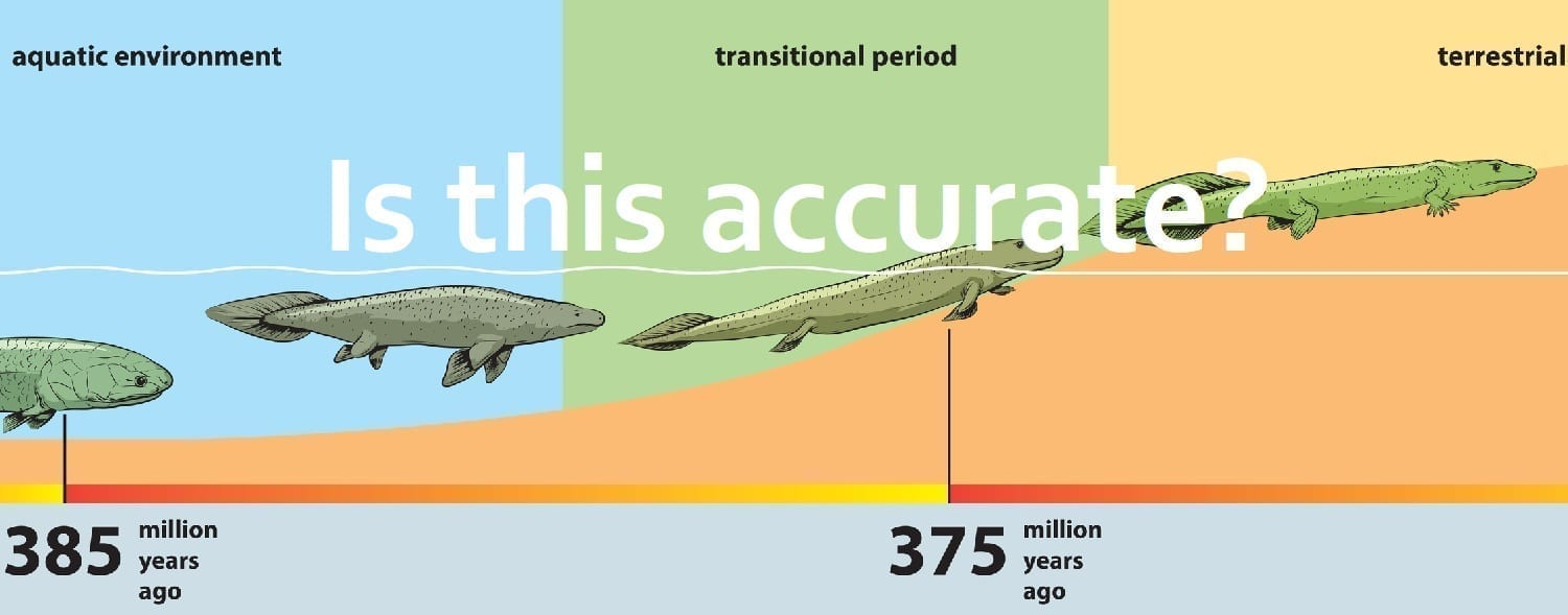 "Fish to tetrapod ""transitions"" including Tiktaalik: Illustration 36698001 © Lukaves - Dreamstime.com"