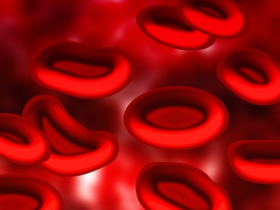 Red Blood Cells CG image, pixabay