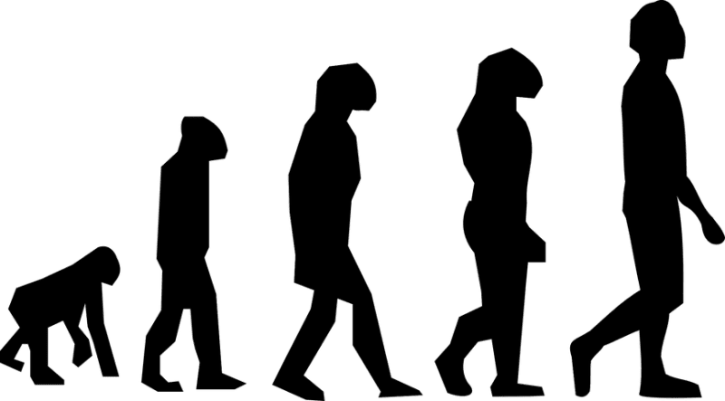 Silhouette of Evolution of Man from Apes