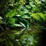 Jungle foliage with water, photo credit: George Hodan