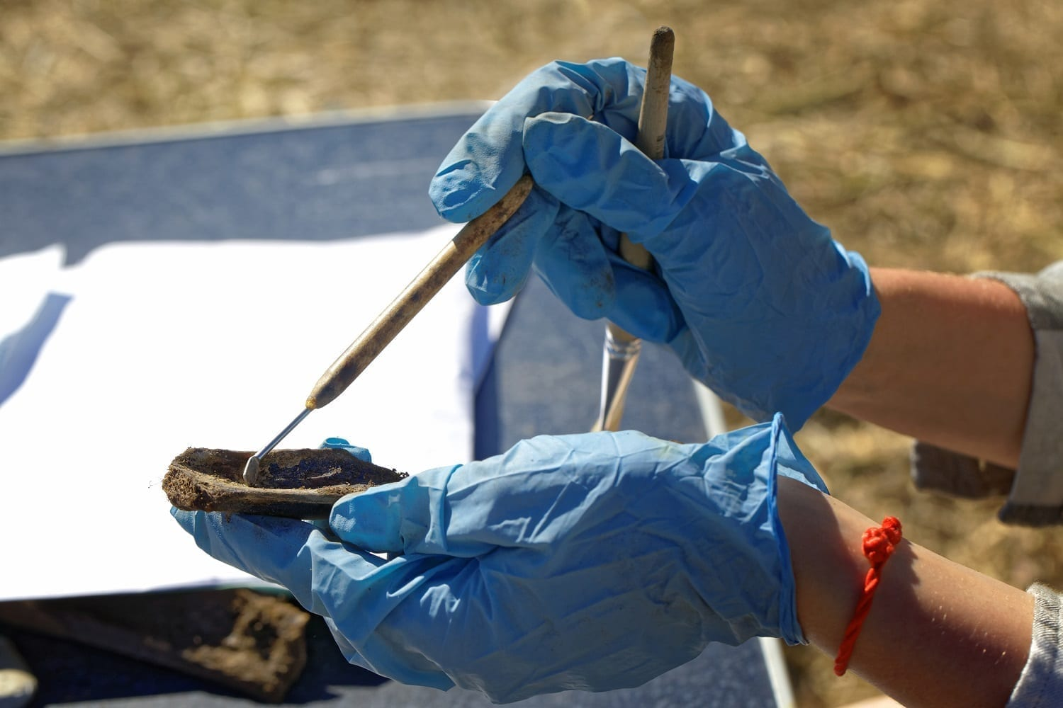Preparing a bone from an archaeological dig site: ID 124703931 © Krugloff | Dreamstime.com