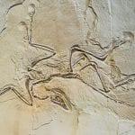 Archaeopteryx in sandstone: ID 32027033 © Gekaskr | Dreamstime.com