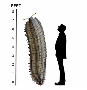 Genesis Apologetics-Arthropleura with man for scale