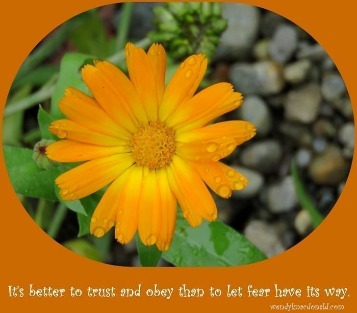 "Photo credit: Wendy MacDonald ""It's better to trust and obey than to let fear have its way"""