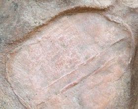 Dickinsonia fossil: ID 80983783 © Jana Ščigelová | Dreamstime.com