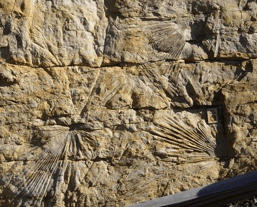 Palm-like frond fossils sideways with layers splitting them: photo credit: kgov.com