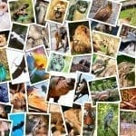 Collage of animal photographs: ID 27167497 © Satori13 | Dreamstime.com