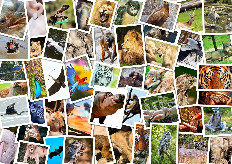 Collage of animal photographs: ID 27167497 © Satori13 | Dreamstime.com