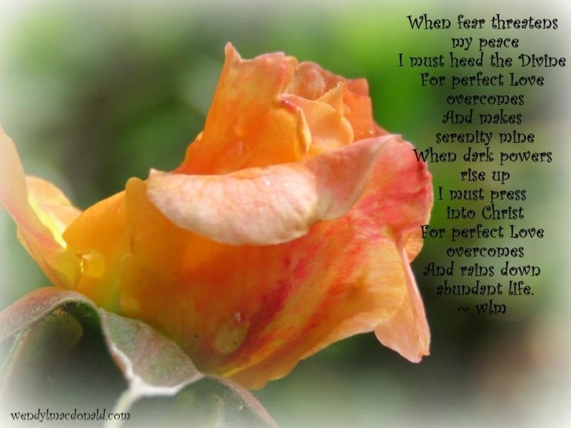 Peach colored rose with poem below on the side, photo credit: Wendy MacDonald