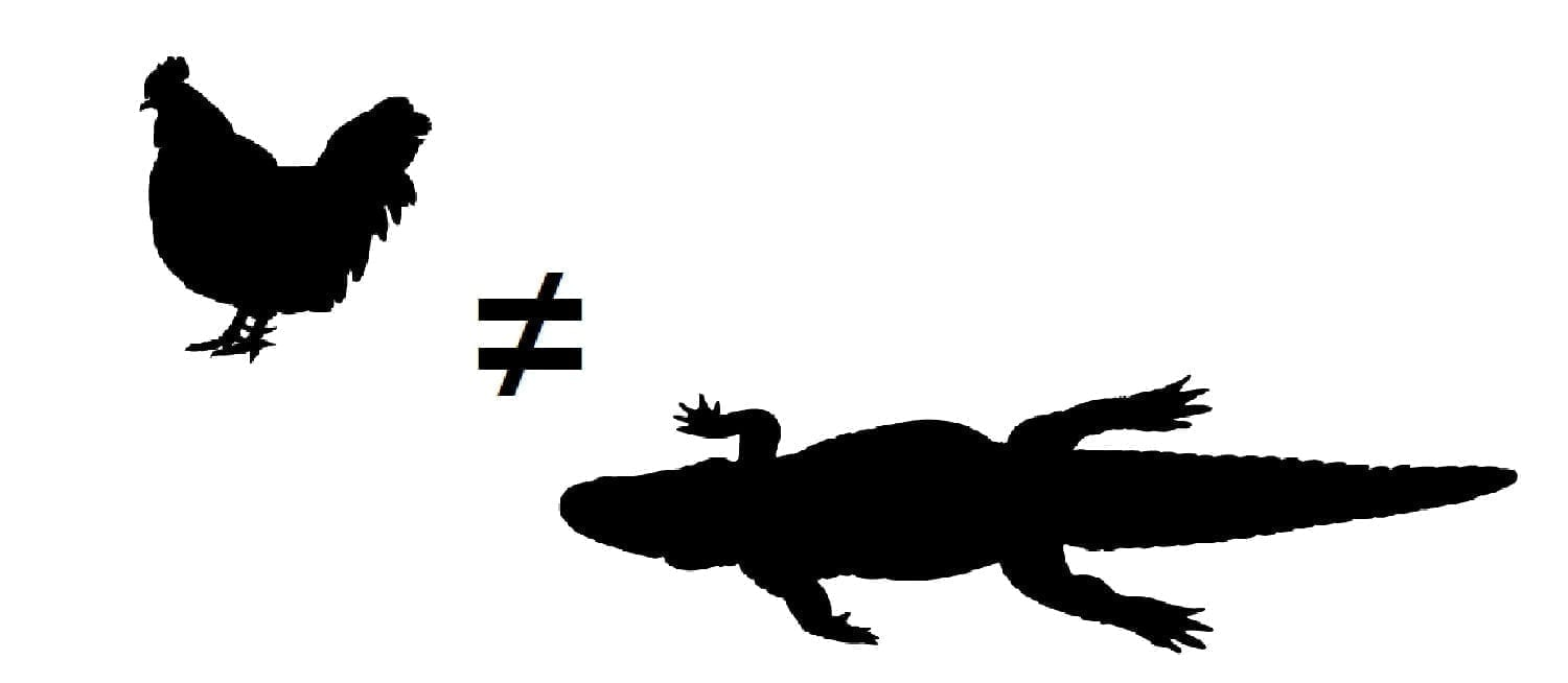 Chicken ≠ Alligator: adapted from ID 86551549 © Vladimir Velickovic | Dreamstime.com
