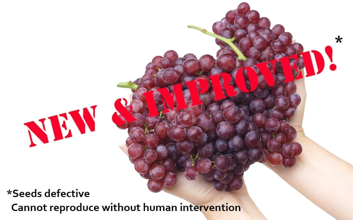 """Seedless grapes labeled """"New & Improved""""* Cannot reproduce without human intervention: Photo 99401766 © Weerapat Kiatdumrong - Dreamstime.com"""