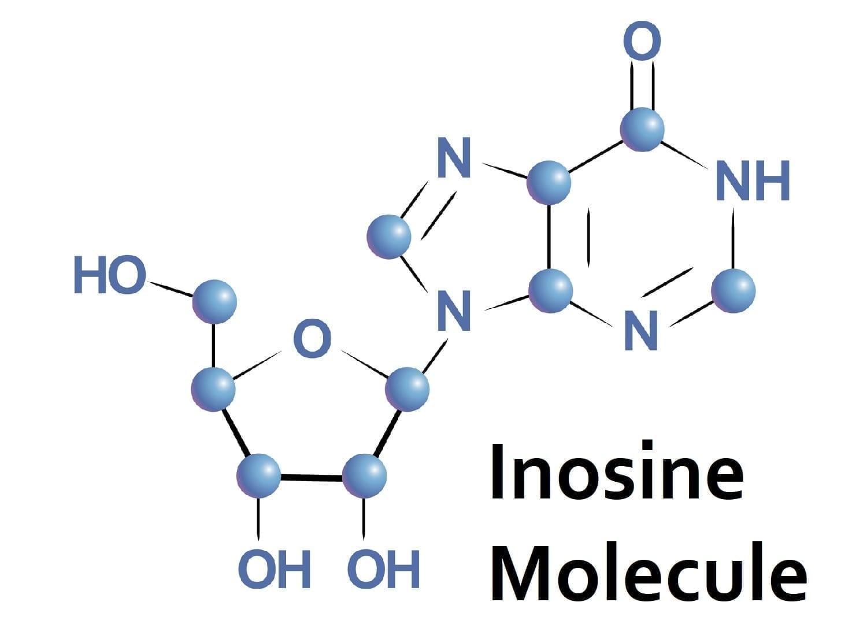 Inosine molecule in tRNA: ID 84208656 © Lyricsai | Dreamstime.com