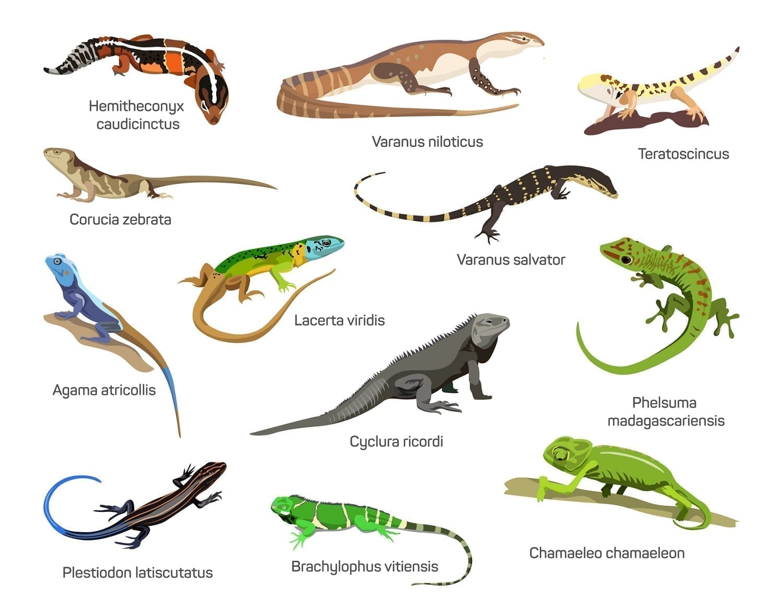 A CG depiction of dozen lizard species: ID 70178272 © Ekaterina Muzyka | Dreamstime.com