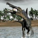 Spinosaurus eating a fish while walking in water: ID 38448909 © Elena Duvernay | Dreamstime.com