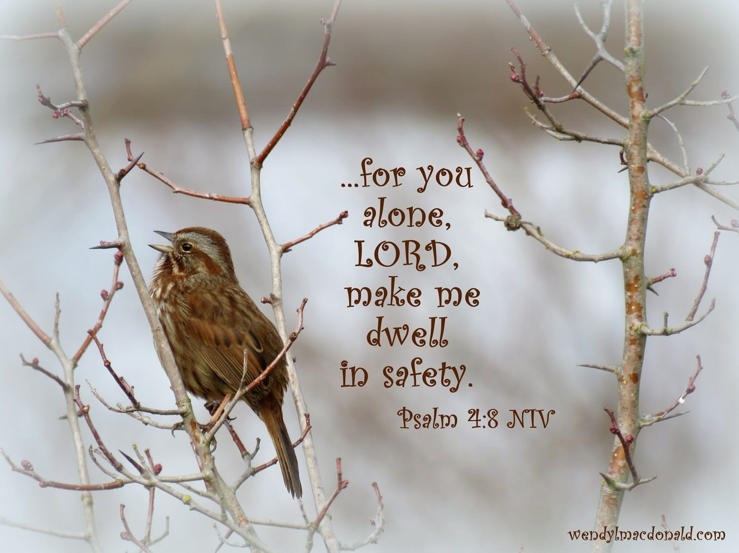 Sparrow with Psalm 4:8, Photo credit: Wendy MacDonald
