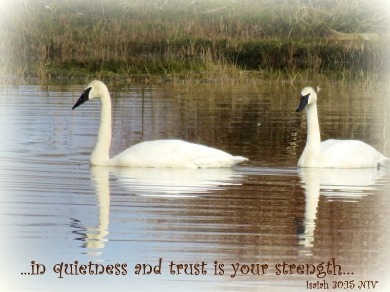 in quietness and trust is your strength…Isaiah 30:15 NIV, Photo credit: Wendy MacDonald